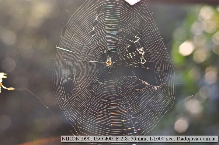 Фото живой природы на Nikon D90
