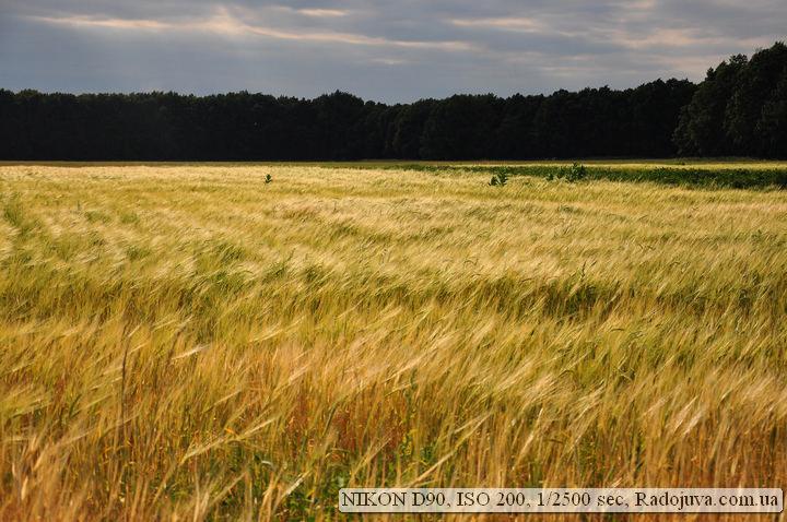Фото природы на Nikon D90