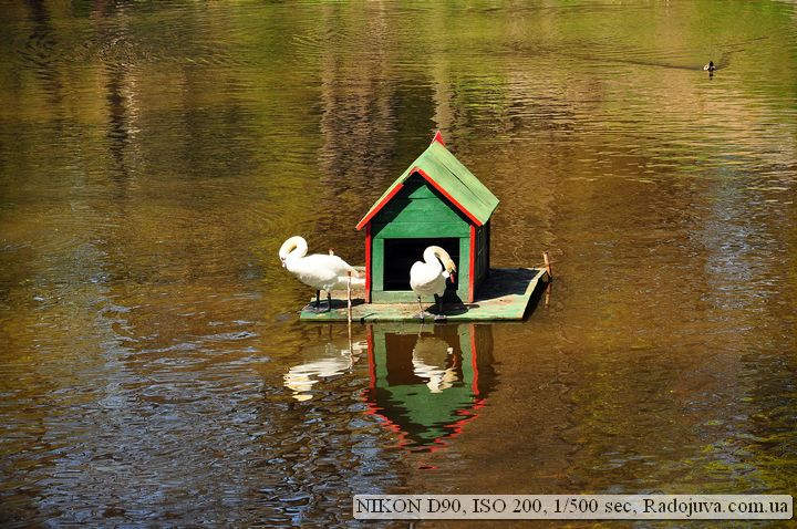 Пример фотографии на Nikon D90