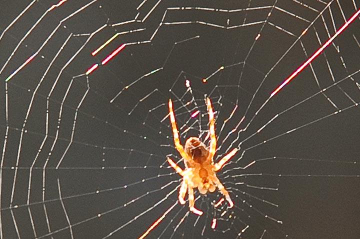 Пример абберации. Красные ореолы паутинки.