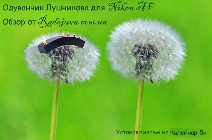 Одуванчик лушникова для Никон. Постер.