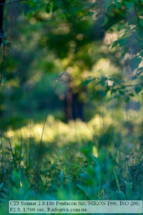 Сказочная картинка на Carl Zeiss Jena Sonnar 180 2.8 Pentacon Six