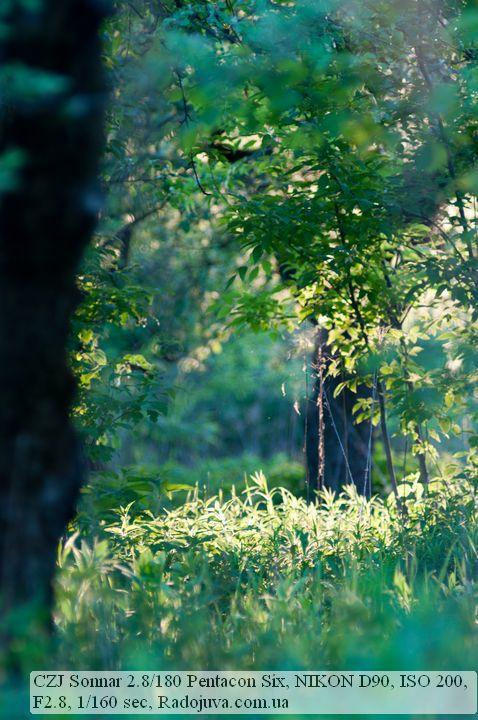 Photo by Carl Zeiss Jena Sonnar 180 2.8 Pentacon Six