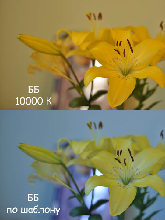 White balance according to the template and with manual temperature setting