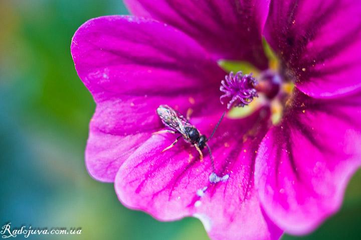 Фото с использованием макроколец. Цветок и букашка