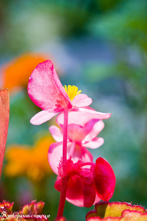 Фото с использованием макроколец. Цветок