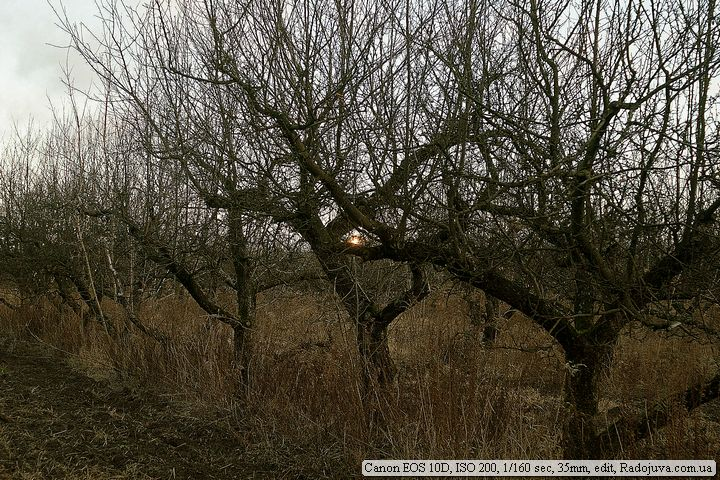 Пример фото на Canon 10D