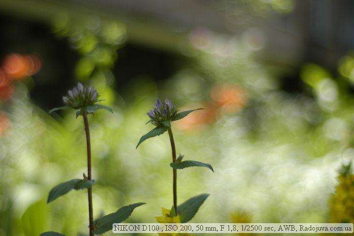 Пример фото на Nikon D100
