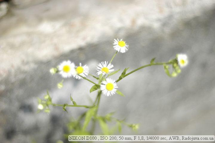 Пример фотографии на Nikon D 100