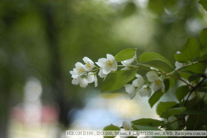 Пример фотографии на Nikon D100