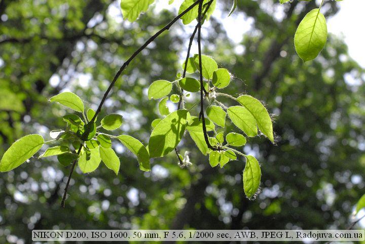 Пример фотографии на Nikon D200 без обработки. Высокое значение ИСО 1600
