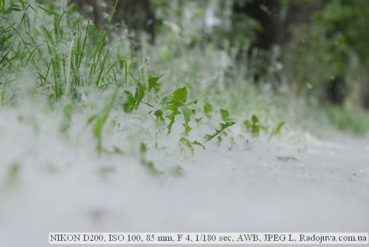 Пример фото на Nikon D200. Экспонометр легко справляется с нестандартными задачами