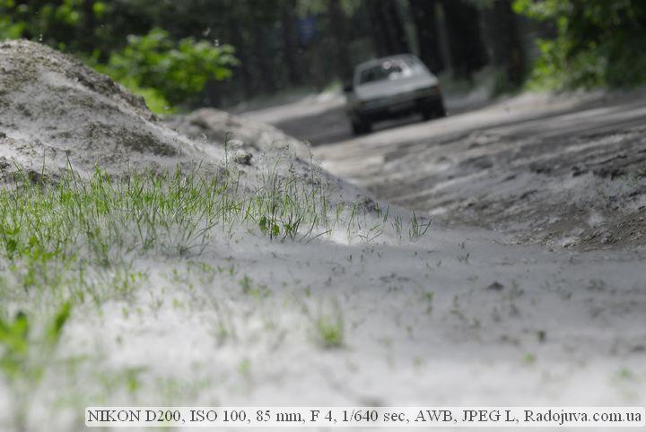 Пример фотографии на Nikon D200 без обработки. Тополиный пух