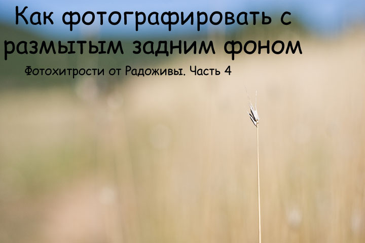 Размытый задний и передний фон. Мое фото. F2.0, 50mm, ISO 200, 4000', Гелиос-81н, Nikon D40