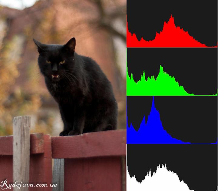 """Фотография с огромным темным участком. Гистограмма """"сдвинута"""" влево."""
