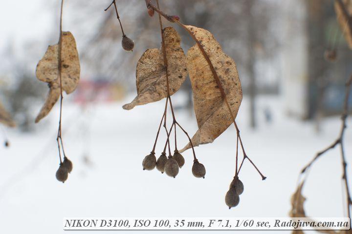 Пример фото на Nikon D3100