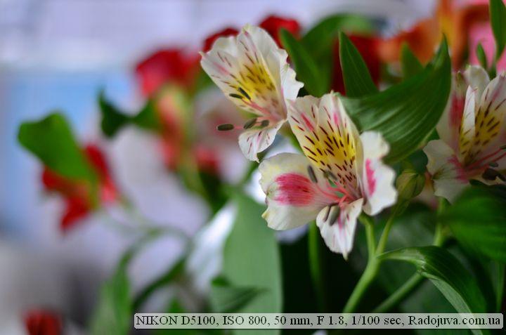 Пример фото на Nikon D5100. Потеря сочности цветовой гаммы при поднятии ИСО