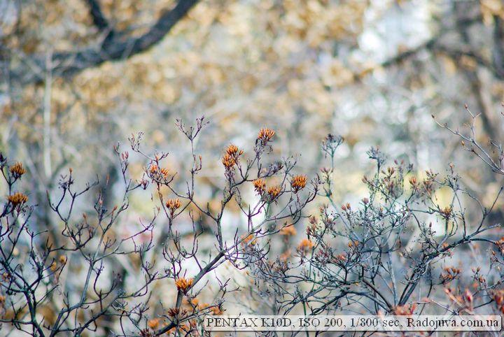 Pentax K10 D примеры фото