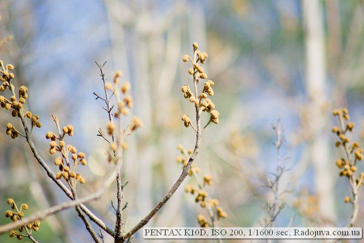 Pentax K10D примеры фотографий