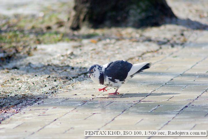 Pentax K10 D примеры фотографий