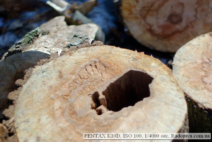 Пример фотографии на Pentax K10 D