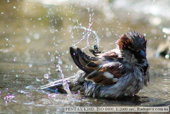 Фотография на Пентакс К10 Д на высоких значениях чувствительности