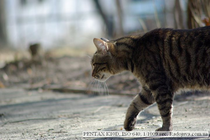 Фотография на Pentax K10D