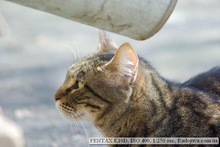 Пример фото на Pentax K 10 D