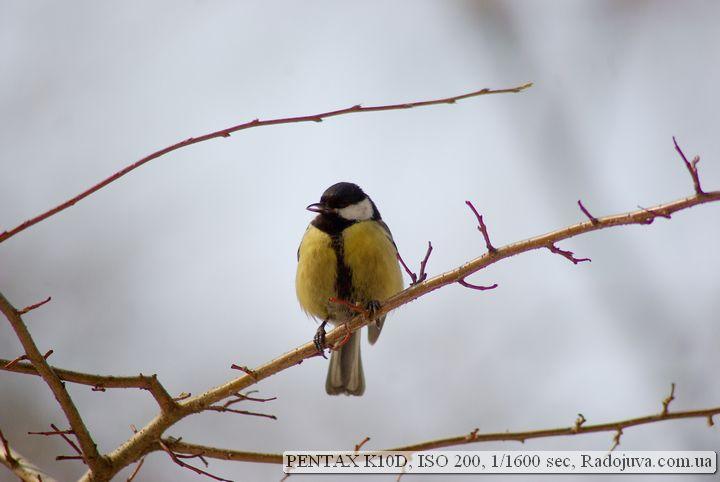 Фото на Pentax K10D