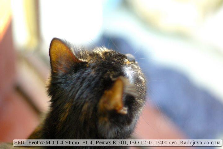 Фото на SMC Pentax-M 1:1,4 50mm