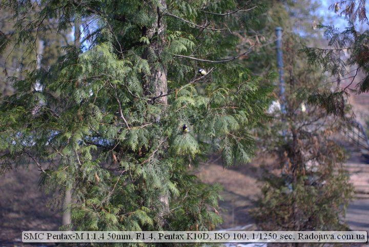 Фото на Pentax-m 50mm F1.4 SMC