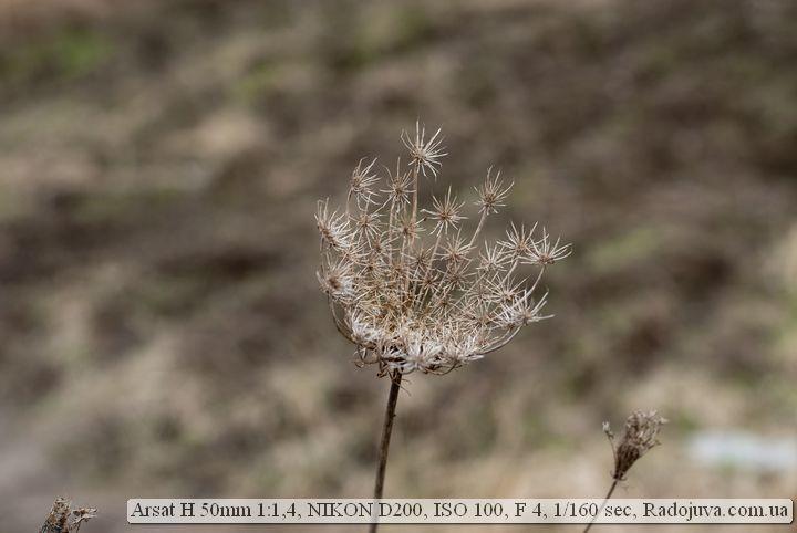 Пример фото на Гелиос-123Н 1:1.4 50мм