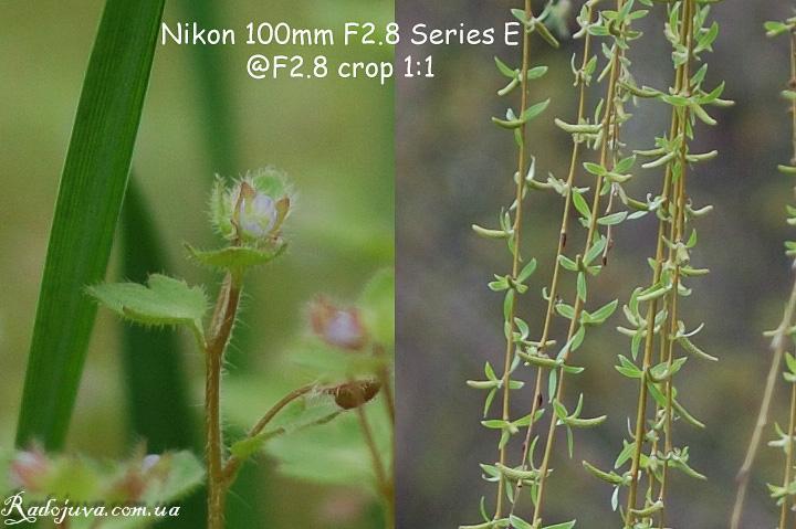 Резкость объектива Nikon 100mm F 2.8 Series E. Кропы изображений. Качество 70 процентов. ISO 200.