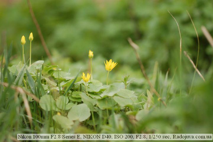 Пример фотографии на Nikon 100 mm F 2.8 Series E