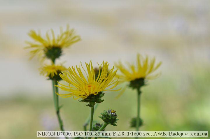 Фото на Nikon D7000