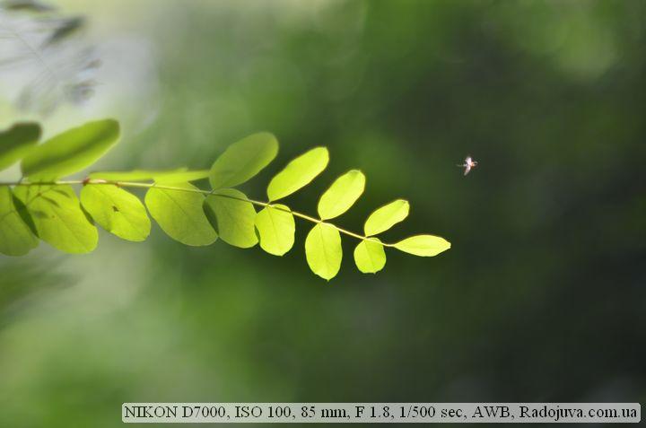 Пример фотографии на Никон Д7000