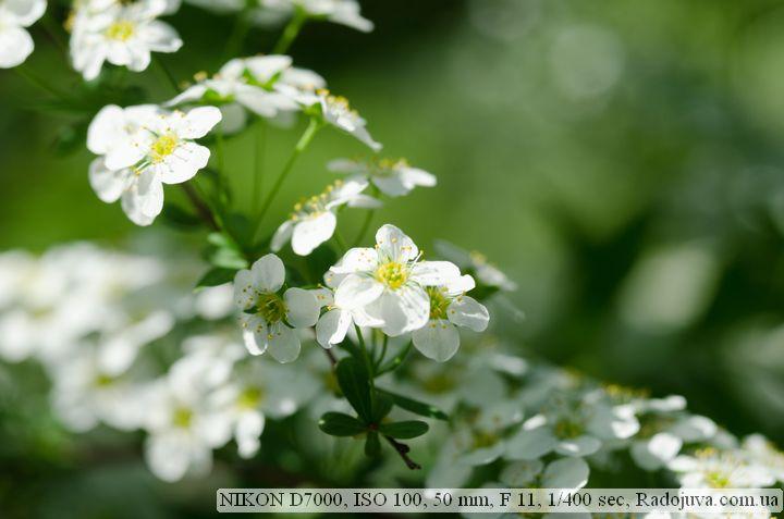 Пример фотографии на Nikon D7000