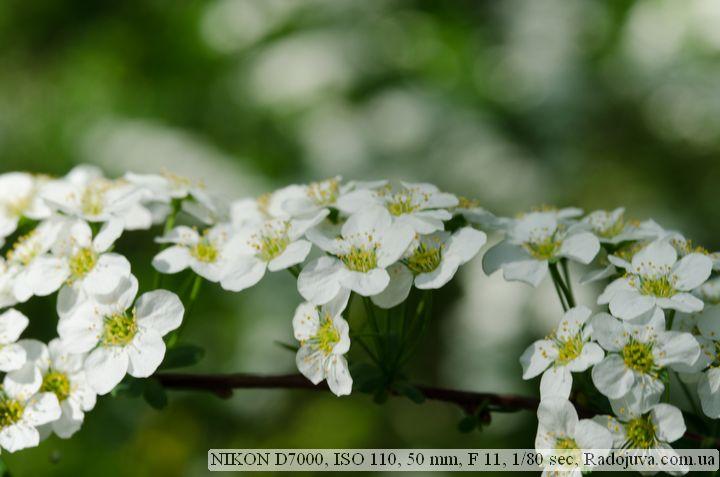 Пример фотографии на Nikon D 7000