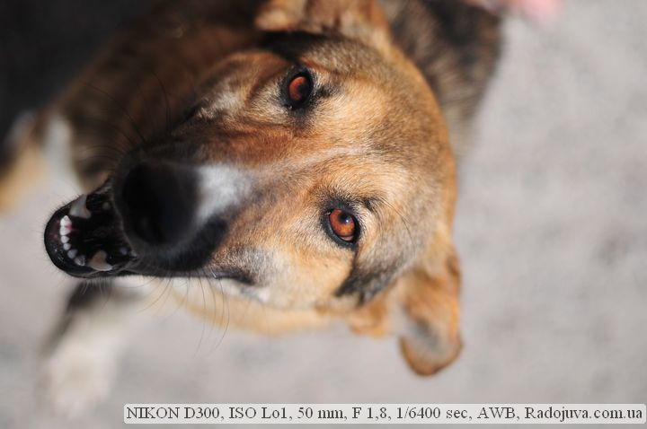 Пример фотографии на Nikon D300