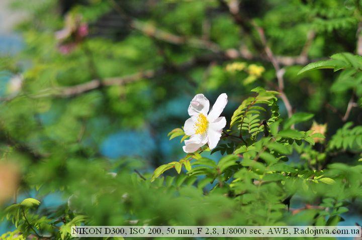 Пример фотографии на Nikon D 300