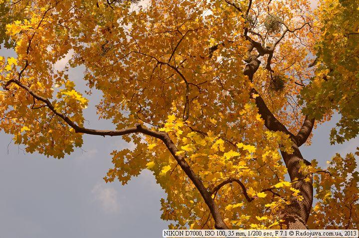 Пример фото на Nikon D7000
