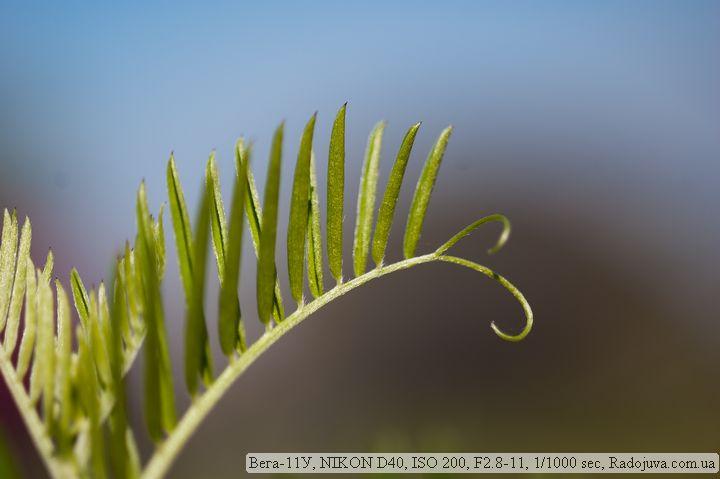 Макро фотогарфия. Снято на Вега-11У