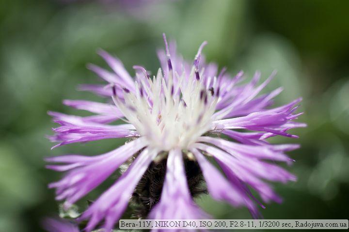 Цветок. Макро. Снято на Вега-11У и Nikon D40