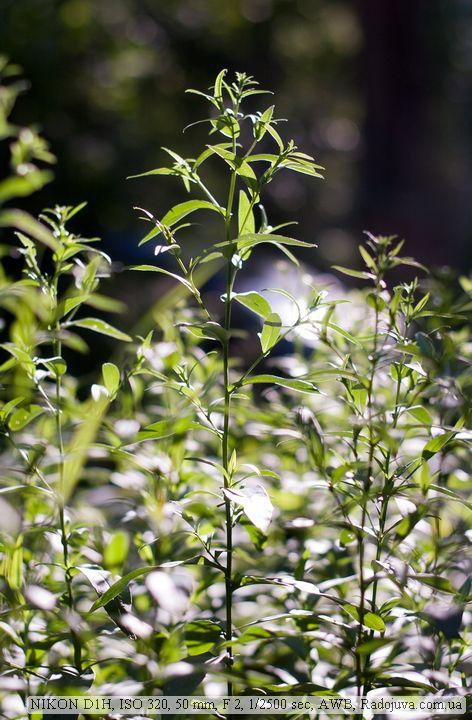 Пример фото на Nikon D1H