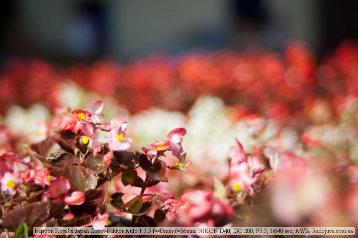 Пример фото на Nikon 43-86mm f3.5 Zoom-Nikkor Auto