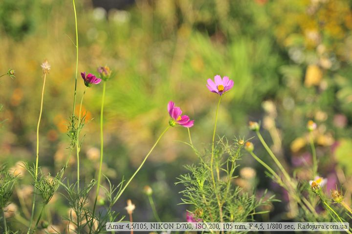 Пример фотографии на Amar 4,5/105