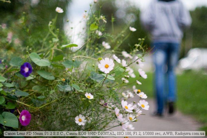 Фото на Canon 55 1.2. Очень маленькая ГРИП, изображение кажется мягковатым