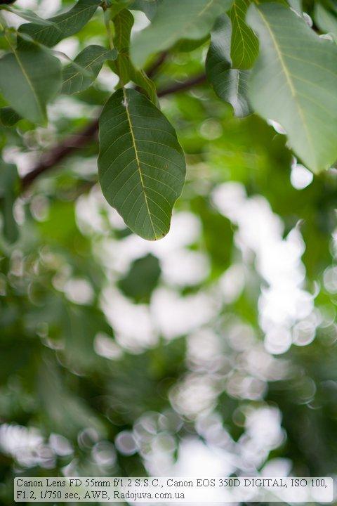 Пример фотографии на Canon 55mm F1.2 FD. Боке