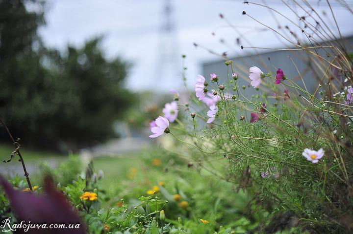 Фото. Цветы в движении от сильного ветра