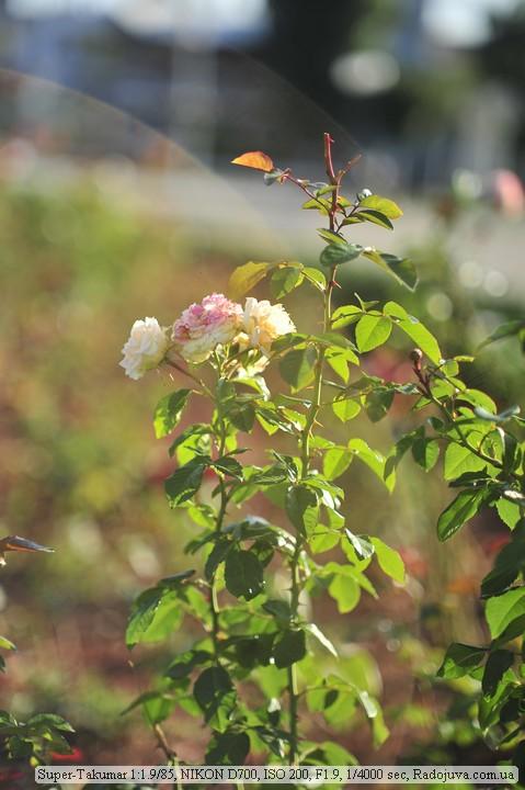 Фото на Asahi Opt. Co. Super-Takumar 1.9 85